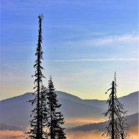 Солнечный туман :: Сергей Чиняев