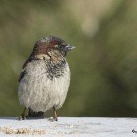 Пташка :: Татьяна Огаркова