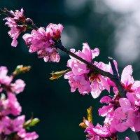 Апрельский блюз :: Надежда
