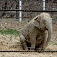 Устал,слоник :: Виолетта
