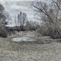 Ожидание весны. :: Андрий Майковский