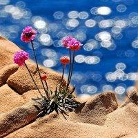 мир солнца, моря и цветов :: viton