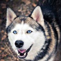 Собака-улыбака :: Дима Тищенко