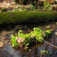 Тропинкой через болото. :: Лена Минакова