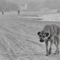 Край моря. Пегий пёс. :: Andrey Nemo