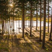 ...и солнце сквозь сосны :: Дмитрий Костоусов