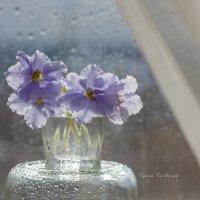Весна на окошке :: Ирина Kачевская
