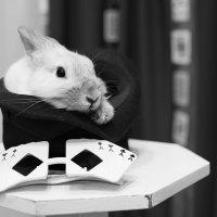 Волшебный кроЛик :: Елена Васильева