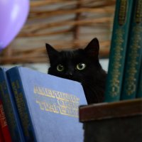 Cat :: Александр Сатаненко