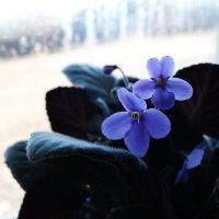 Синее чудо :: Елена Фалилеева-Диомидова