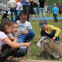 общение с овечкой на празднике Сабантуй :: Валентина Боровкова
