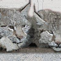 кошачья семья :: Юлия Денискина