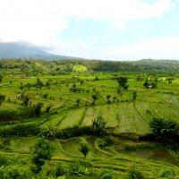 Рисовые поля. Бали :: Юрий Белоусов