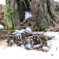 Первый снег :: Юлия Скрипник