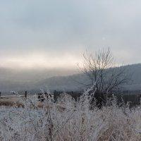 Утро туманное :: Светлана Евсюкова