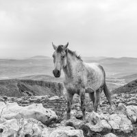 Одинокая лошадь :: Genadi Zamirsky