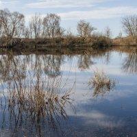 Весенние воды :: Елена Пономарева