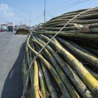 Вторая неделя. Фото 9. Таиланд. Срирача :: Владимир Шибинский