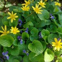 Весна из нашего двора. Приятное соседство :: Нина Корешкова