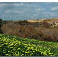 Цветущая пустыня Негев. :: Leonid Korenfeld