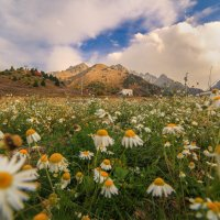 Ромашки и горы :: Марат Макс