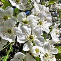 весна :: Дмитрий Михайлиди