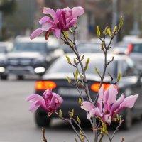 Весна в городе :: Андрей Майоров