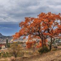 Осень в Крыму :: Владимир Колесников