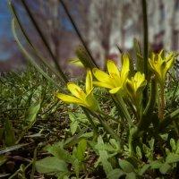 Весна в городе :: LARCHIK-55