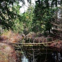 Берендеев лес :: Paparazzi
