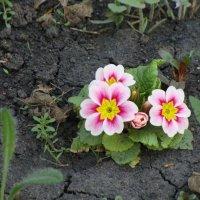 весна.... :: Olga Grebennikova