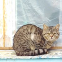 Сидела кошка на окошке... :: Ольга Алеева