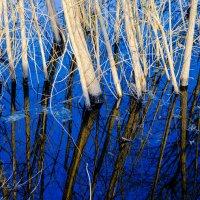 Отражение. :: Валерий Гудков