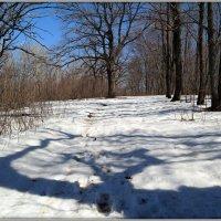 Последний снег апреля :: Андрей Заломленков