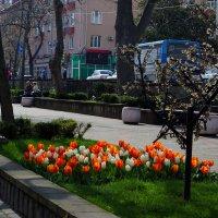 Туапсе. 30 марта 2016 г. :: Алексей Golovchenko