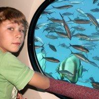 Подводный мир через иллюминатор :: Lukum