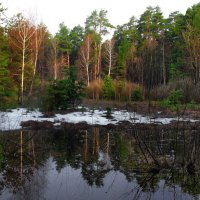 Леса Мещёрские,глухие... :: Лесо-Вед (Баранов)