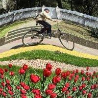 Неудивлённый велосипедист :: Валерий Дворников