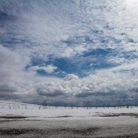 Весна...... :: Irina Polkova