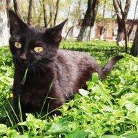 Котенок весной :: оксана косатенко