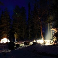 Ночной лес :: Nikolay Zinoviev