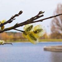 Весна пришла ! :: Светлана З