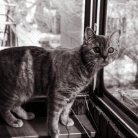 шустрая кошка :: Ольга Елина
