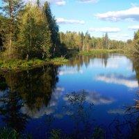 лесное озеро :: Наталья Зимирева