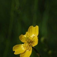 Желтый центровой :: Svetla - Ya