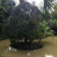 Ну как, скажите, на таком махоньком островке выросло такое большое дерево? :: Елена Павлова (Смолова)