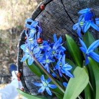 весна :: Анастасия Шатоба