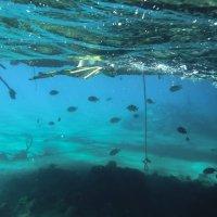 Красное море :: ELENA RAUPOVA