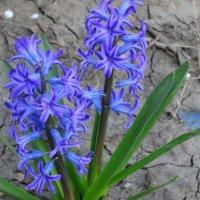 Весна в городе... :: Тамара (st.tamara)