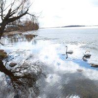 белые лебеди.... :: vika EGOROVA